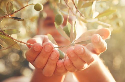 L'olio extravergine di oliva non fa ingrassare