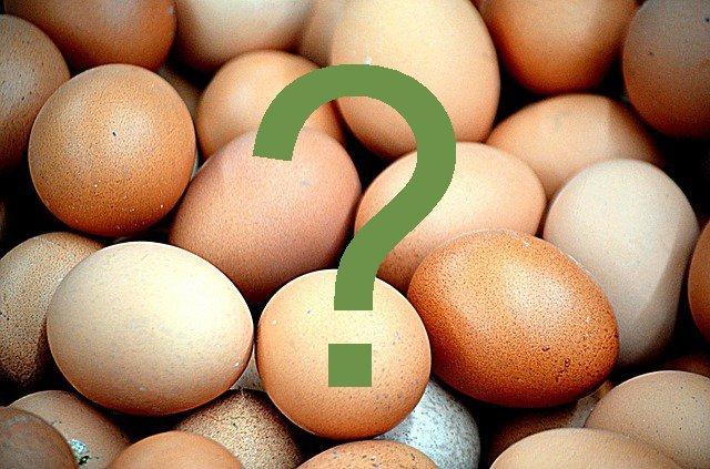 Guida all'acquisto delle uova
