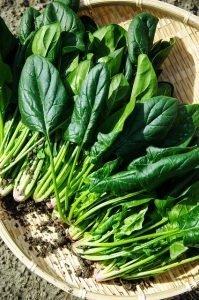 spinaci al mercato